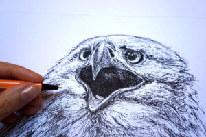 Orzeł 2 - szkic - rysunek, piórko