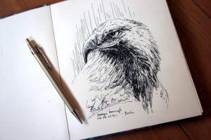 Orzeł - szkic - rysunek, piórko