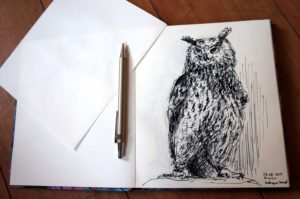 Sowa- szkic - rysunek, piórko