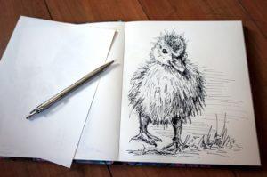 Kaczorek- szkic - rysunek, piórko